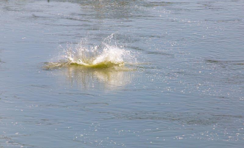 Água do respingo dos peixes imagens de stock