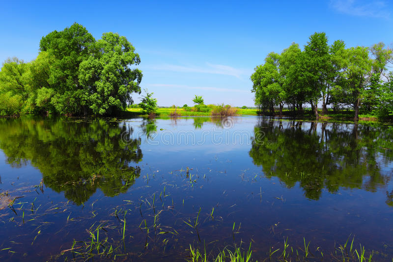 Água do rio calma e árvores verdes como a porta abstrata fotos de stock royalty free