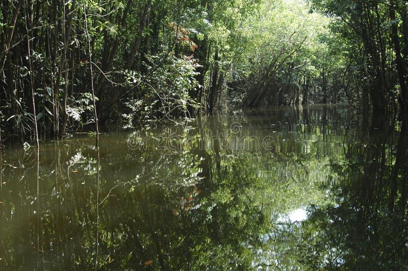 Água e árvores imagem de stock royalty free
