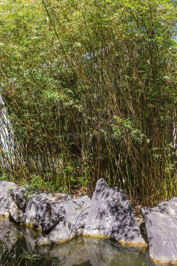 Água e bambu foto de stock royalty free