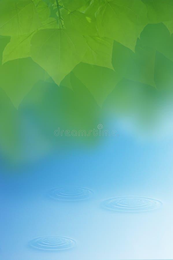 Água e folhas fotografia de stock royalty free