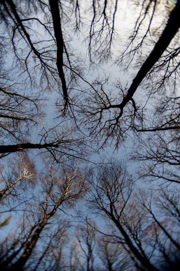 Download Água E Mais Forrest Dentro Do Waterloop Holandês Forrest Para A Pesquisa Hidráulica Imagem de Stock - Imagem de laboratório, nave: 65575675