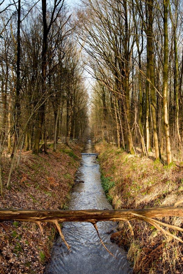 Download Água E Mais Forrest Dentro Do Waterloop Holandês Forrest Para A Pesquisa Hidráulica Foto de Stock - Imagem de hydrodynamic, principal: 65575682