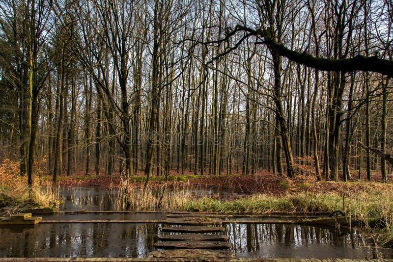 Download Água E Mais Forrest Dentro Do Waterloop Holandês Forrest Para A Pesquisa Hidráulica Foto de Stock - Imagem de museu, porcas: 65575898