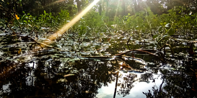 Água e plantas expostas à luz solar na floresta fotos de stock