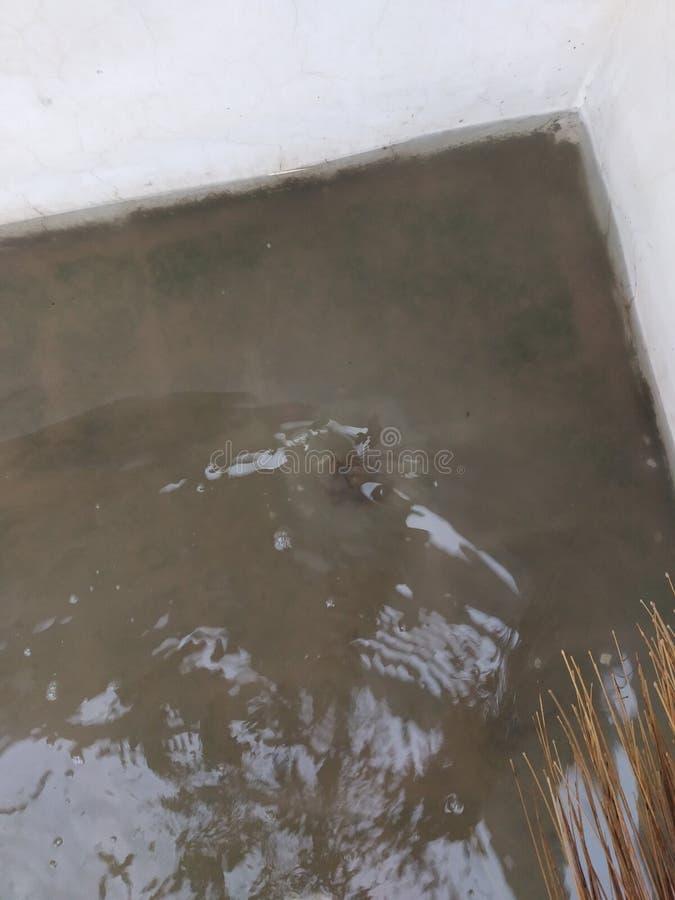 Água em telhados ou 2° andar no bathinda Chuva pesada de 24 horas imagem de stock