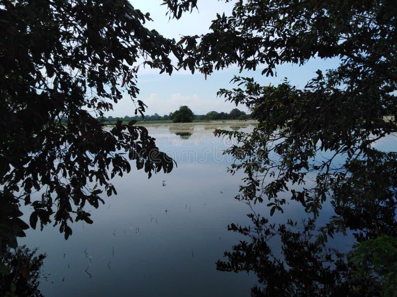 Água entre a água escura de duas árvores fotos de stock royalty free