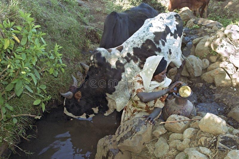 Água etíope do esforço da mulher do poço natural fotos de stock royalty free