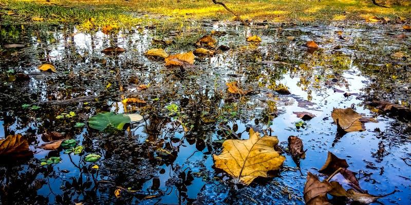 Água, grama e folhas imagens de stock