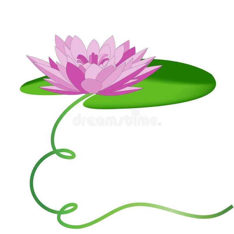 Água-lírio do Lilac ilustração do vetor