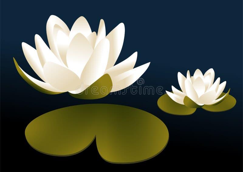 Água lilly ilustração royalty free