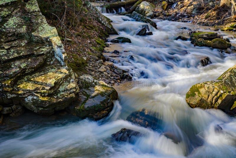 Água movente rápida em um córrego selvagem da truta da montanha fotos de stock royalty free