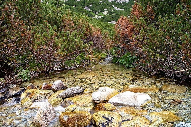 Água no córrego da montanha que corre através do vale de Mlynicka perto da cachoeira de Skok imagens de stock