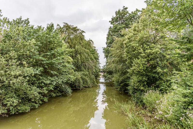 Água poluída da alga verde no canal de Arreso em Frederiksvaerk, Dinamarca fotos de stock