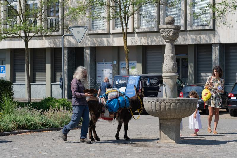 Água potável do asno em Jugendfest Brugg imagens de stock