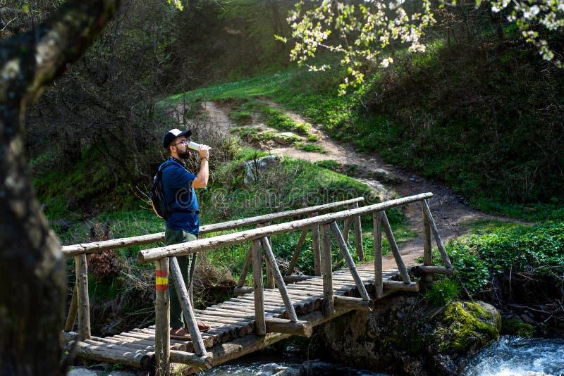 Água potável do homem a ponte de madeira fora foto de stock