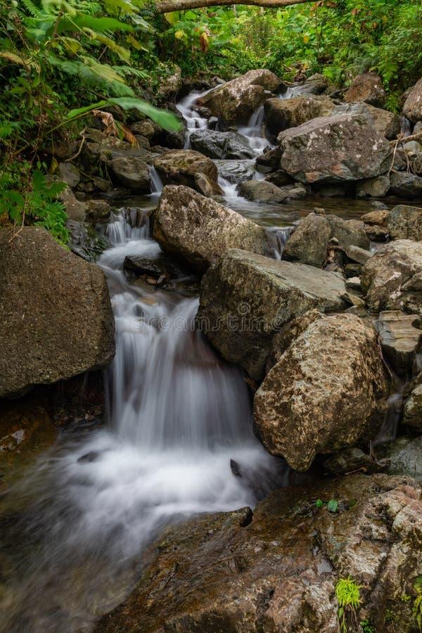 Água que corre através das madeiras imagens de stock
