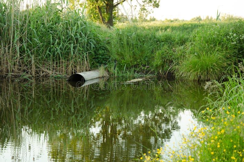 Água que jorra do esgoto ao rio/conceito da ecologia: semente do esgoto fotos de stock