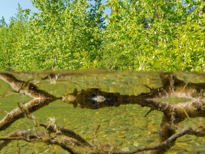 Água rasa da costa do lago ribeirinho do taiga do ecossistema fotografia de stock royalty free