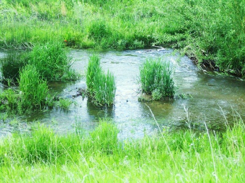 Água Rippling no parque da cidade fotografia de stock royalty free