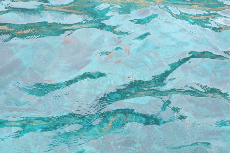 Água transparente com os peixes no fundo imagem de stock royalty free