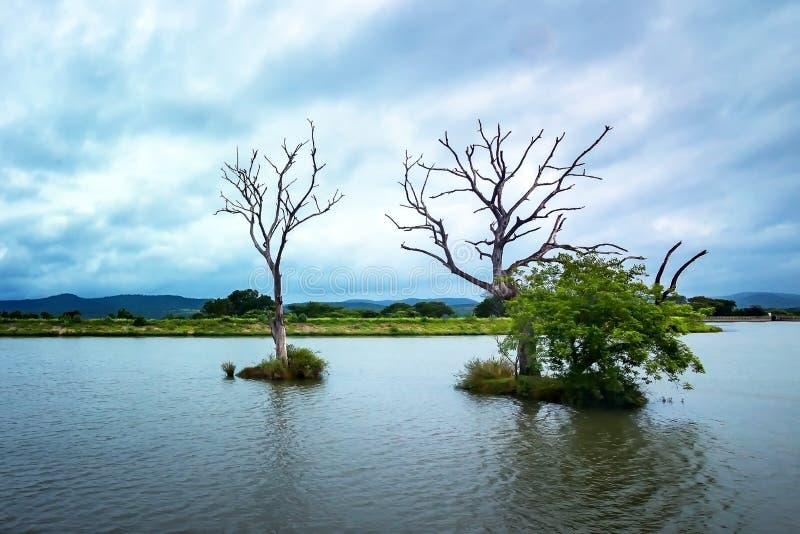 Água traseira Masinagudi-Tamilnadu da represa de Moyar imagem de stock royalty free