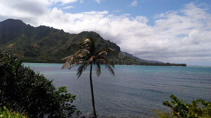 Águas de Havaí imagens de stock