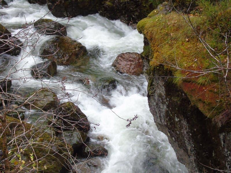 Águas de pressa do rio Coe imagem de stock