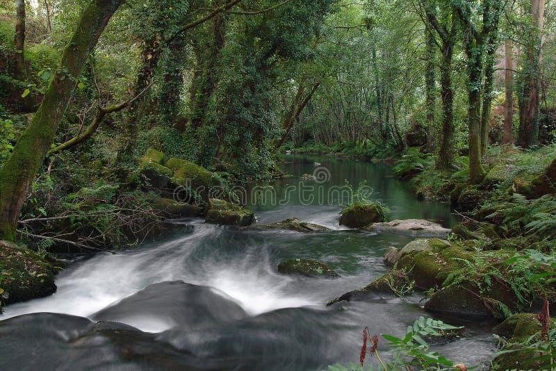 Águas descendentes no rio, cachoeira imagem de stock
