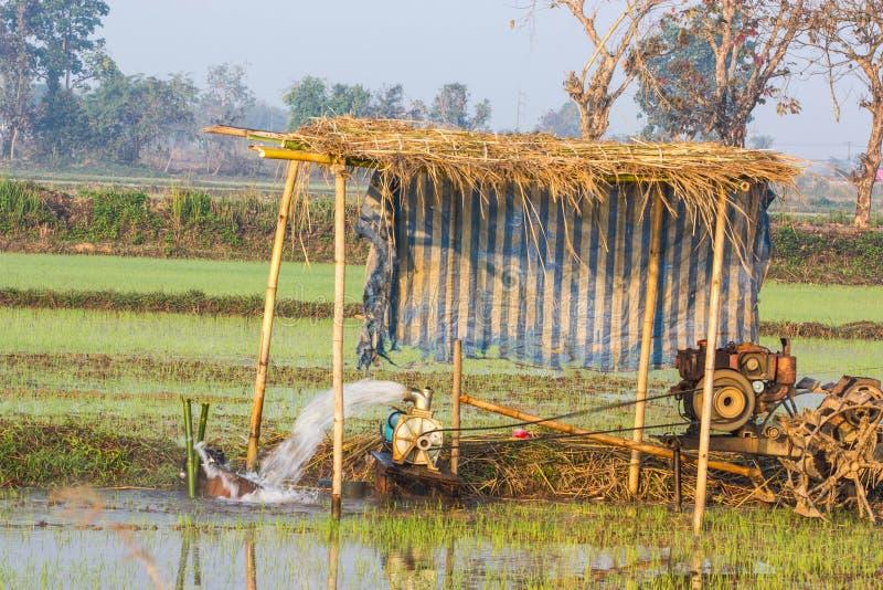 Águas subterrâneas da bomba para o arroz do campo imagens de stock royalty free