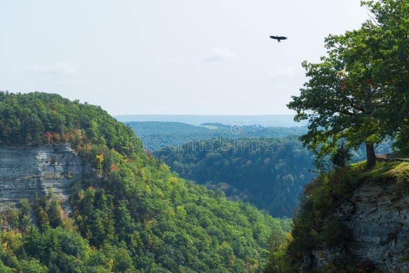 Águia americana que voa sobre um desfiladeiro no parque estadual de Letchworth fotografia de stock royalty free