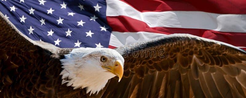 Águia calva e bandeira