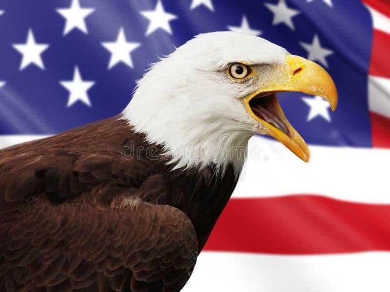 Águia calva e bandeira dos EUA imagens de stock royalty free