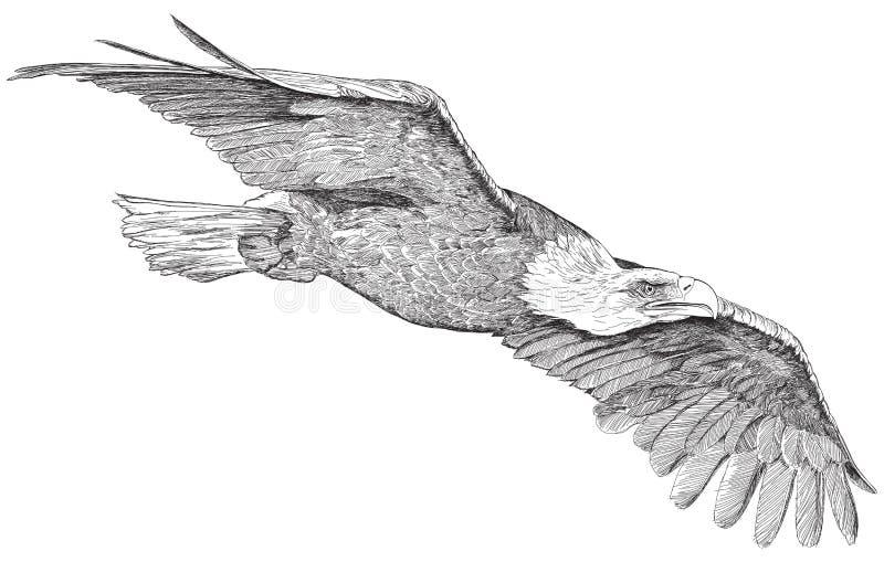 Águia crescente - esboço ilustração royalty free