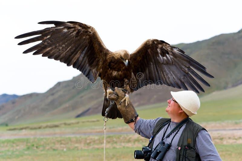 Águia dourada com asas espalhadas foto de stock