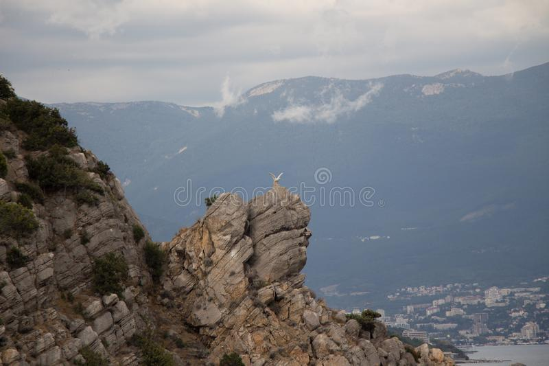 águia Sea yalta Termas foto de stock