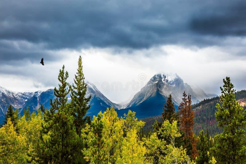 A águia voa sobre as montanhas nevado imagens de stock royalty free