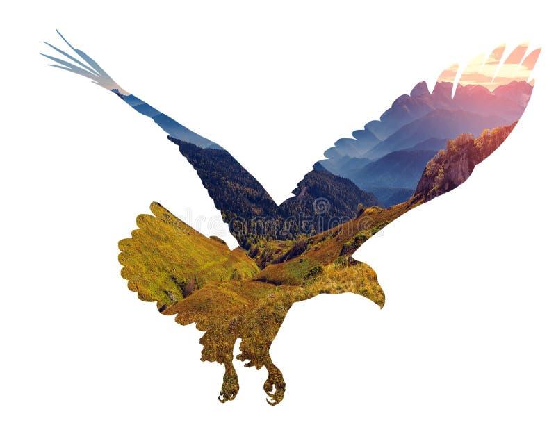 Águila calva en el fondo blanco libre illustration