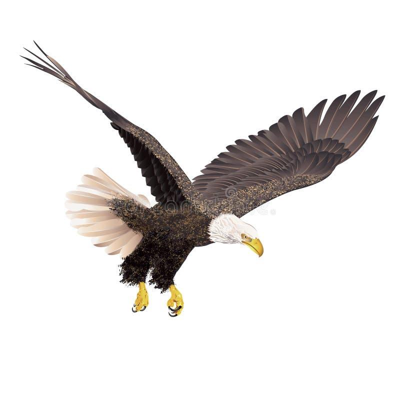 Águila calva en el fondo blanco stock de ilustración