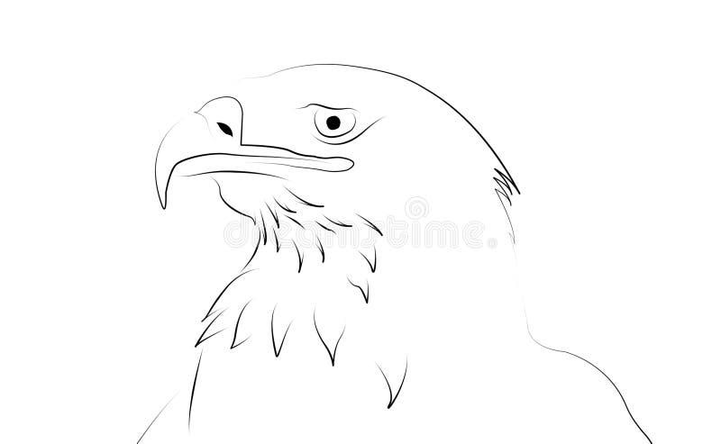 Águila como dibujo lineal stock de ilustración. Ilustración de fondo ...