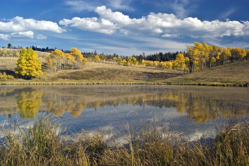Download Álamos tembloses del otoño foto de archivo. Imagen de árboles - 7278016