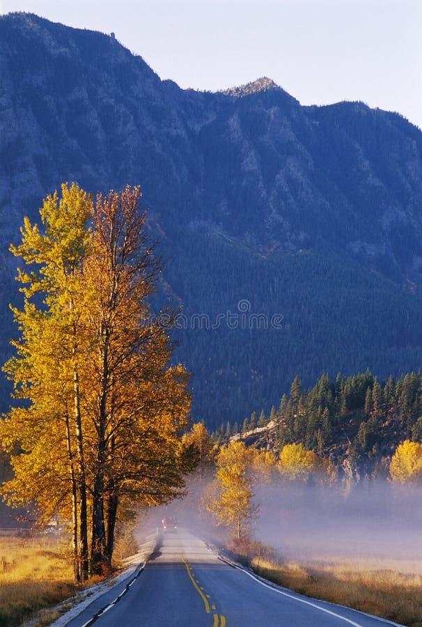 Álamos tremedores do outono ao longo da estrada fotografia de stock