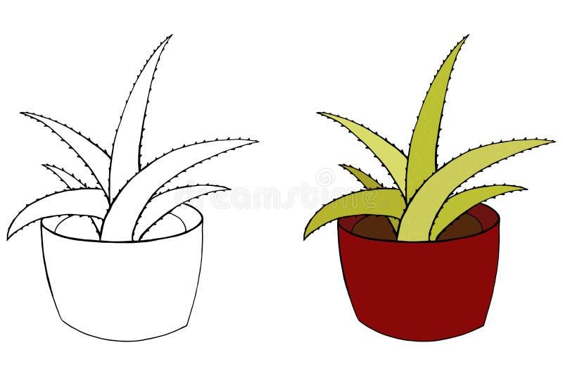 Áloe Vera Ejemplo aislado Houseplant Planta colorida y colorante Pote de cerámica ilustración del vector
