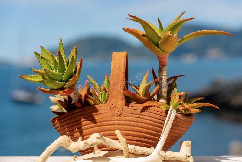 ?loe Vera en el pote de arcilla - planta suculenta imagen de archivo libre de regalías