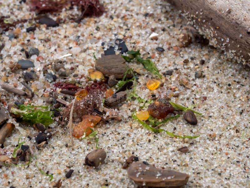 Ámbar de la playa Región de Kaliningrad Rusia Foco suave foto de archivo libre de regalías