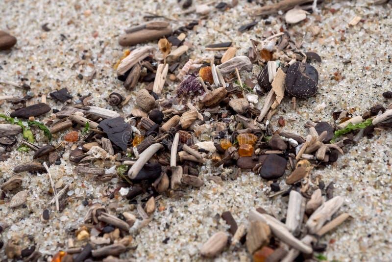 Ámbar en una playa del mar Báltico en la resaca Foco suave imagen de archivo libre de regalías