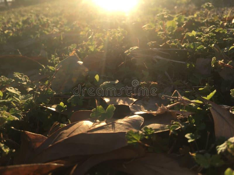 Ángeles herbosos foto de archivo