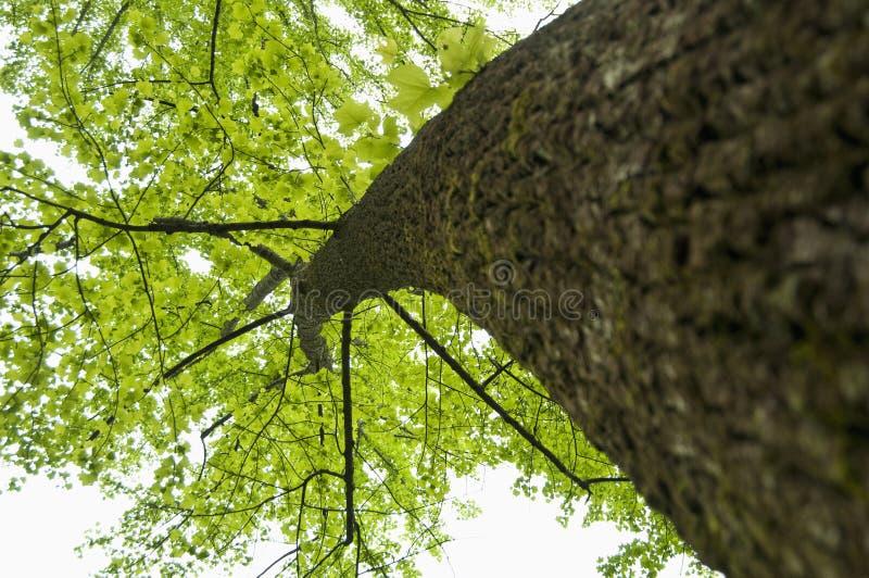 Ángulo ascendente del árbol imagen de archivo