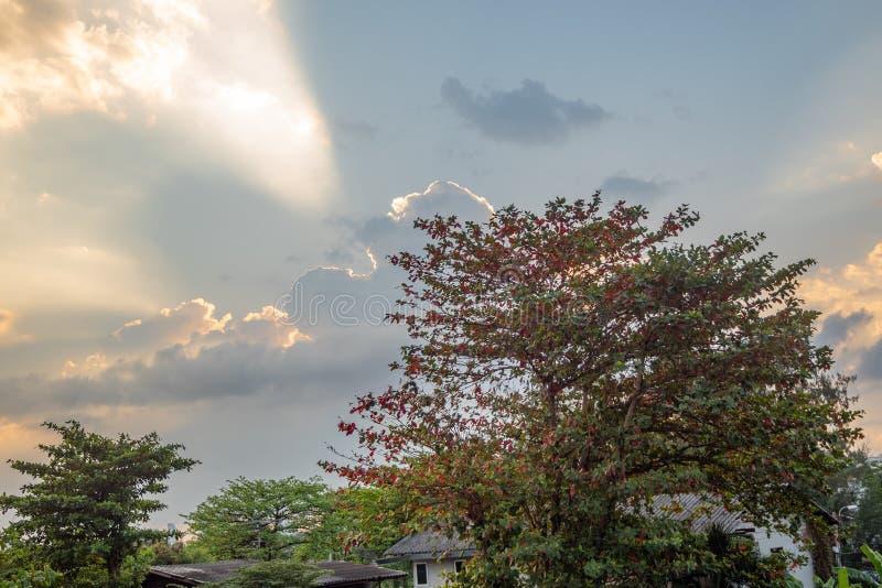 Ángulo bajo del árbol en el cielo de la puesta del sol con el fondo de las nubes foto de archivo