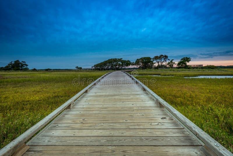Ángulo bajo del paseo marítimo de madera a través del pantano imagen de archivo libre de regalías
